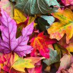 The October Garden | Monthly Gardening Advice for Newly Planted Garden Beds