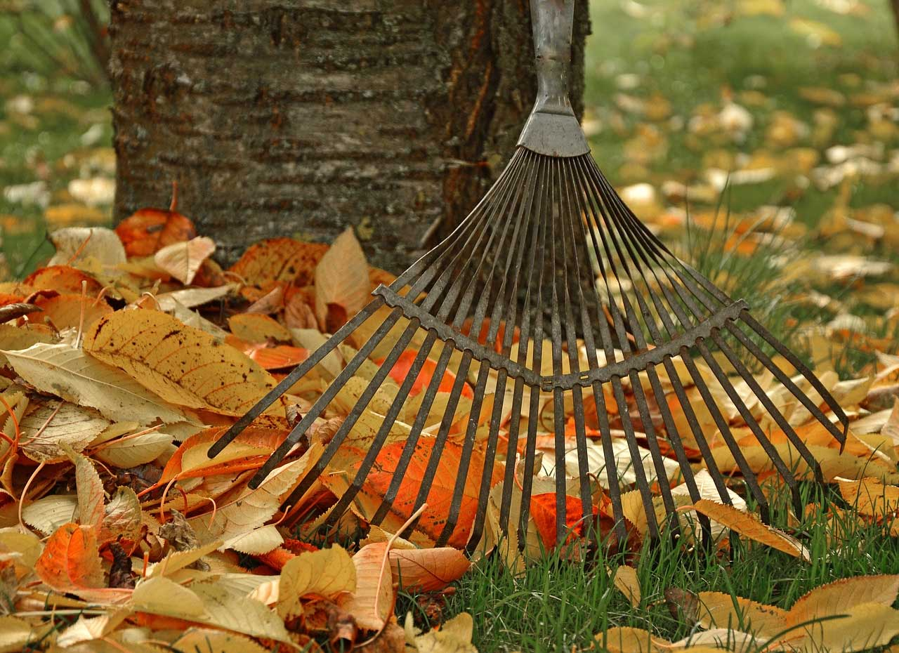 Design for Conscious Living - Fall Garden Checklist - Rake and Leaves
