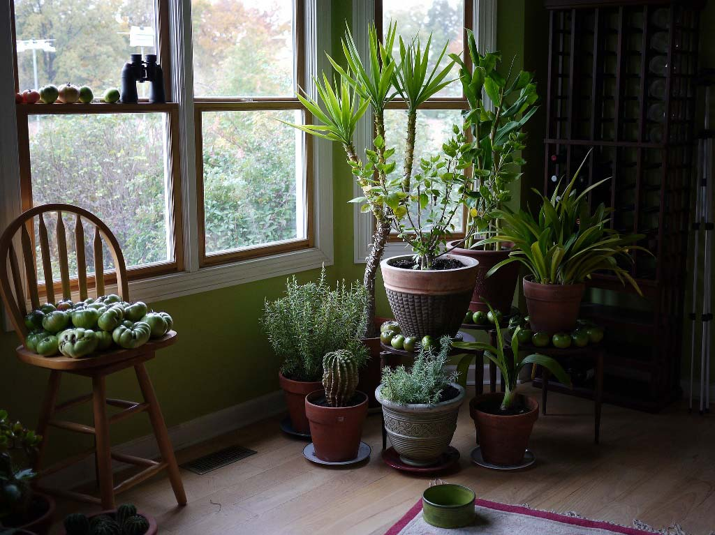 Design for Conscious Living - Indoor Plant Revival - Top Six Indoor Plant Care Tips - Evolving Design Trend - Photo of Houseplants Taken by F D Richards