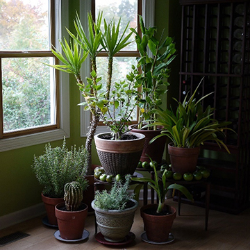 Indoor Plant Revival | Top Six Indoor Plant Care Tips