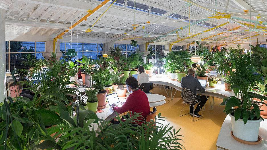 Six Indoor Plant Care Tips - Evolving Design Trend - Photo Linking to Fast Co Design Article - There are Over 2000 Plants in this Lush Co Working Space