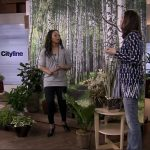 Cityline Guest Designer Celia Alida Rutte Shares Tips for Designing with House Plants