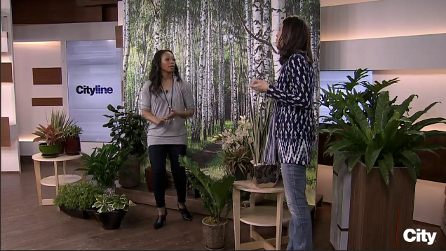 Celia Alida Rutte is on the set of Cityline with Tracy Moore, with a large wall mural of a birch tree forest, and numerous potted plants on the floor.