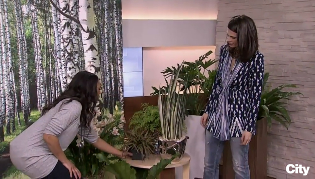Tracy is reaching for a potted plant as Celia and Tracy talk about planters.