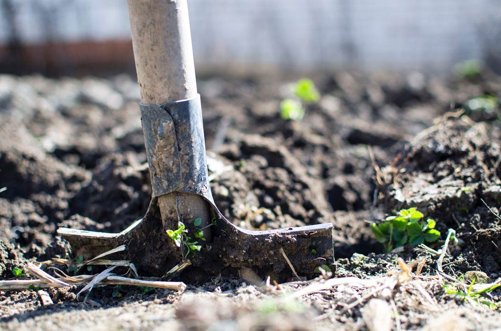 A garden shovel in the ground of a garden bed freshly tilled.