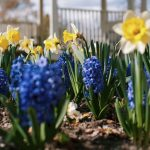 The April Garden | Monthly Gardening Advice for New Gardeners
