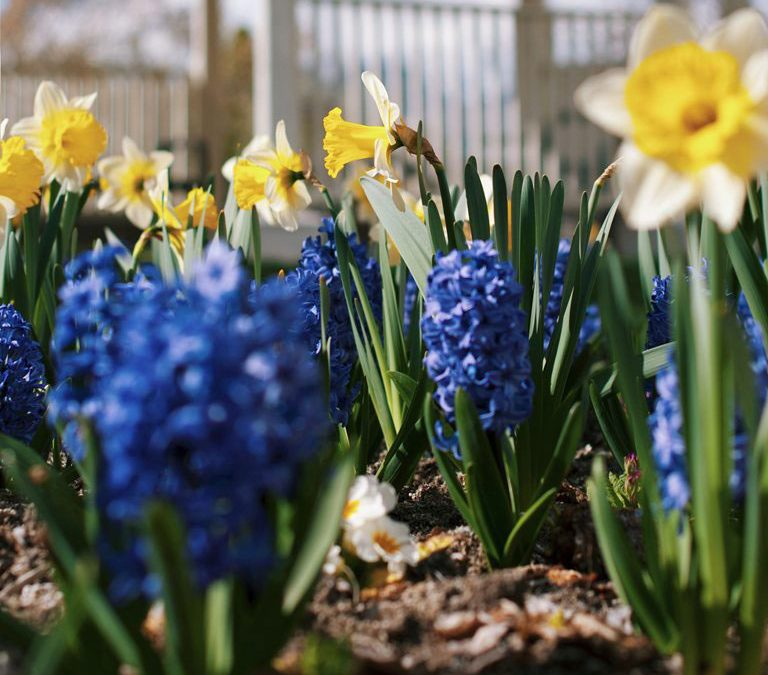 The April Garden   Monthly Gardening Advice for New Gardeners