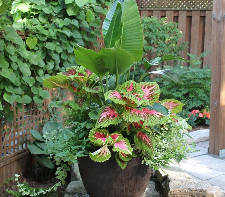 HOW TO DESIGN GORGEOUS GARDEN PLANTERS | CELIA ALIDA RUTTE SHARES HER SECRET