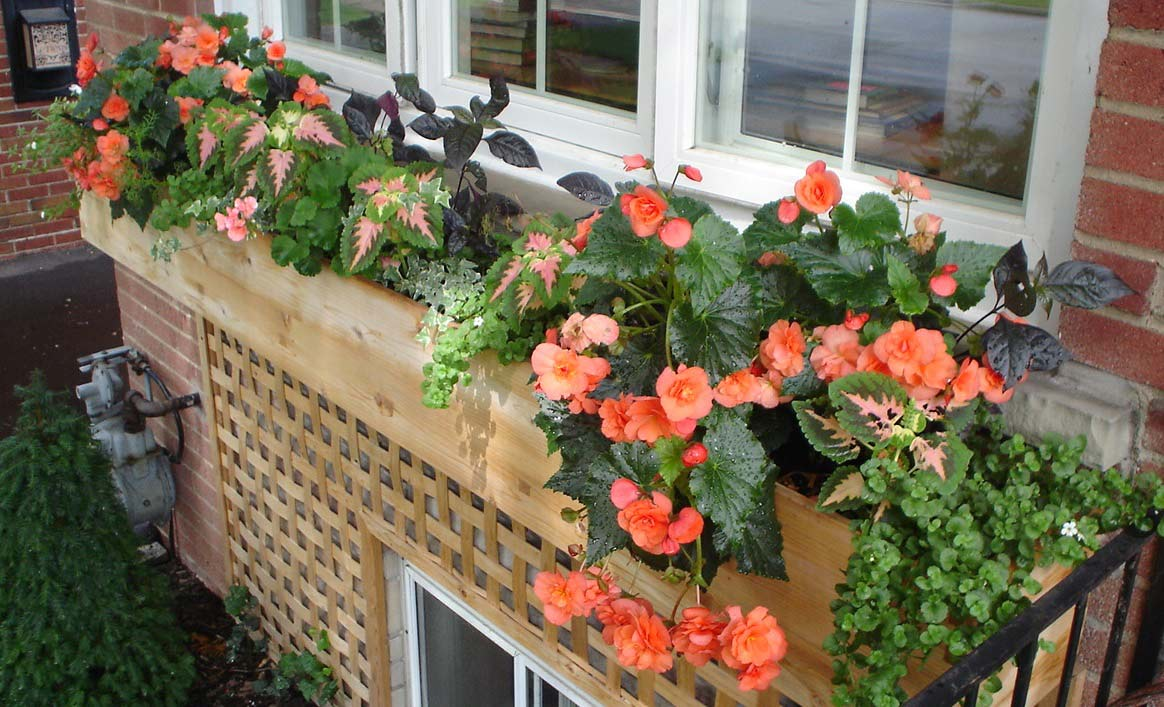 A long cedar window box with a beautiful arrangement of part shade tolerant plants.