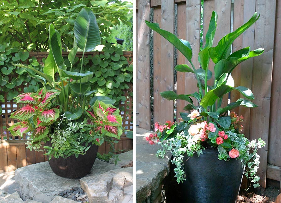 Two beautiful summer planter with bold and colourful plants.