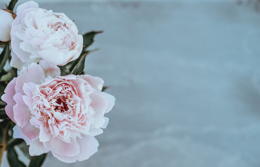 Design for Conscious Living – The June Garden - Monthly Gardening Advice for New Gardeners – Pink Peony - Photo Taken by Annie Spratt on Unsplash
