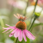 THE JULY GARDEN | MONTHLY GARDENING ADVICE FOR NEW GARDENERS