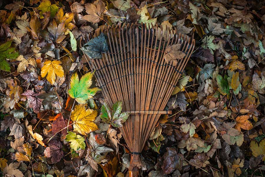 A wooden rack laying on top of a colourful leaf covered ground.
