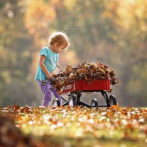 THE OCTOBER GARDEN | MONTHLY GARDENING ADVICE FOR NEW GARDENERS